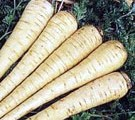 Parsnips Puree